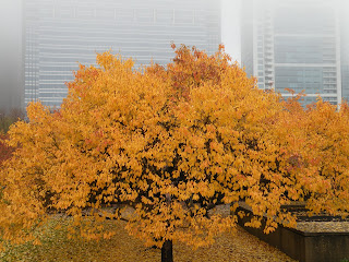 Golden tree in Chicago's Grant Park on a cloudy day