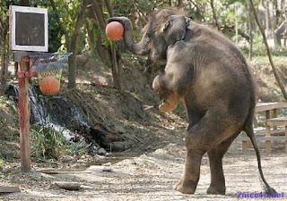 elefante jugando baloncesto