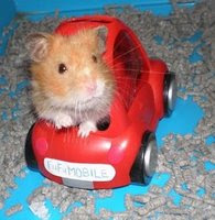 Fufu the Hamsterrier RIP