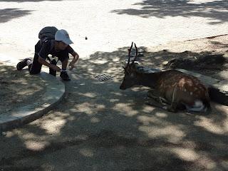 Alimentant un cèrvol de Nara