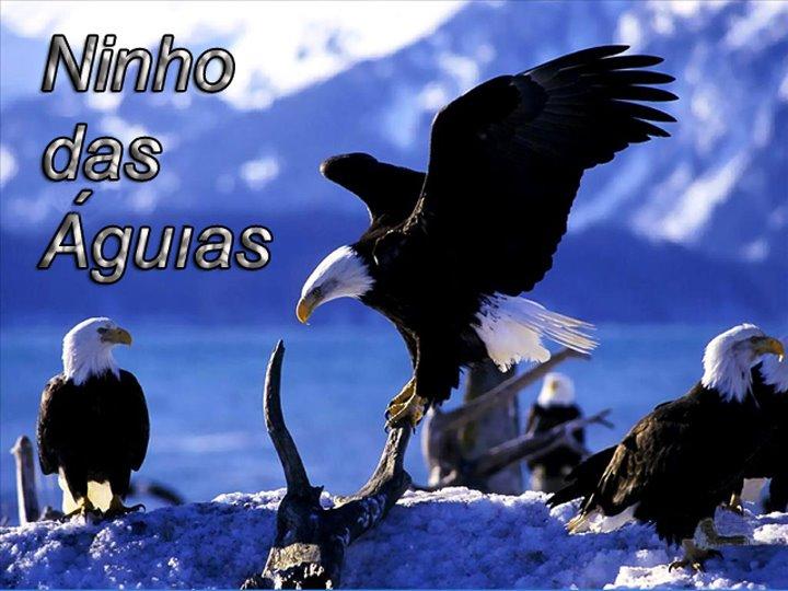 NINHO DAS ÁGUIAS