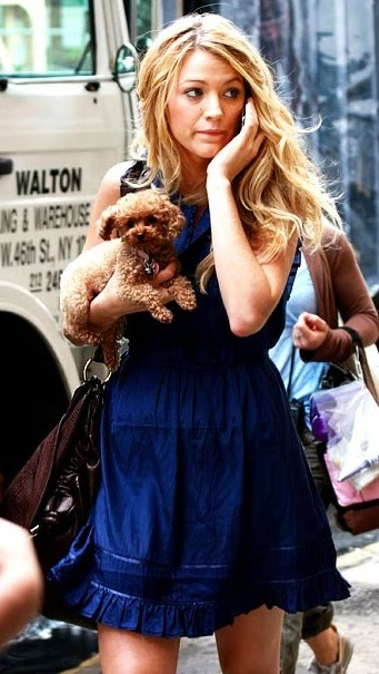 I'm not sure if Blake Lively's dog Penny is a pure breed Toy Poodle or a