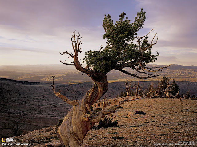 Most Beautiful Wallpapers of Earth,Wild Life & Nature By National Geographic Channel