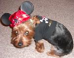 Our Dog Jackson