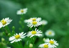 盛开的小花, 有着美丽的回忆