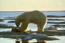 Especial sobre el Cambio Climático y calentamiento global.