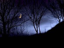 El oscurecimiento global
