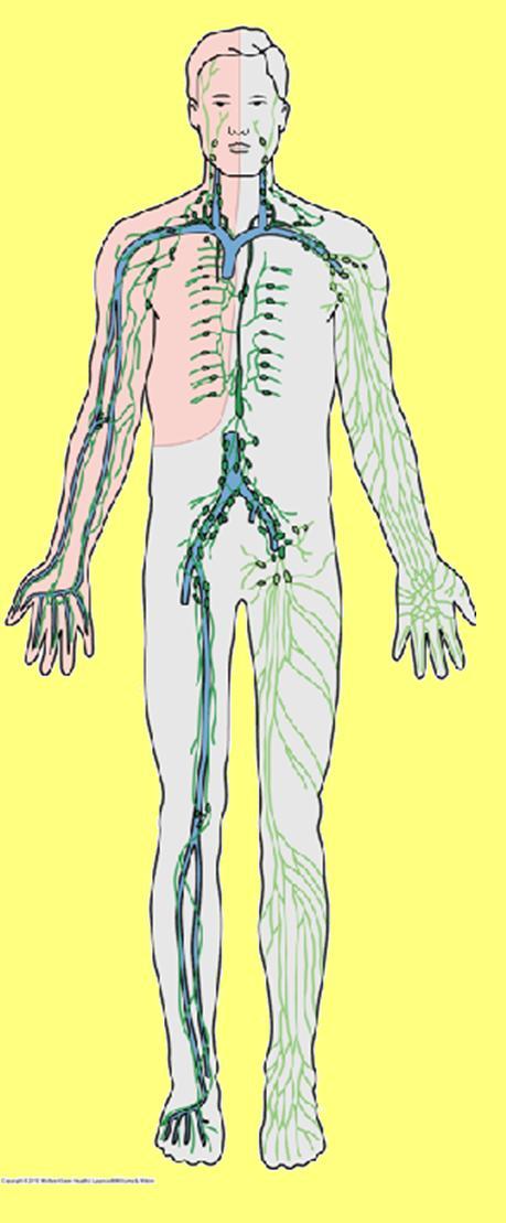 Anatomía UNAM: 2010