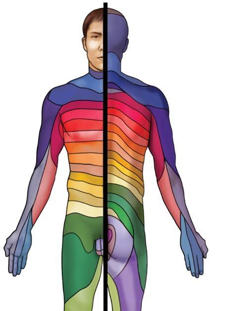 Anatomía UNAM: Dermatoma