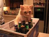 Beer Guardian