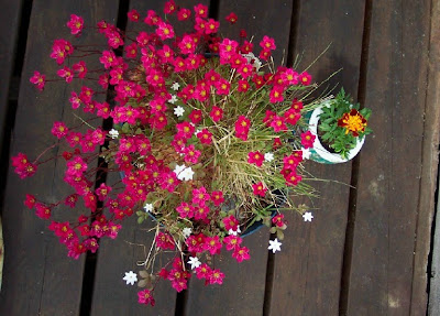 flowers on the deck