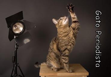 Gato Periodista
