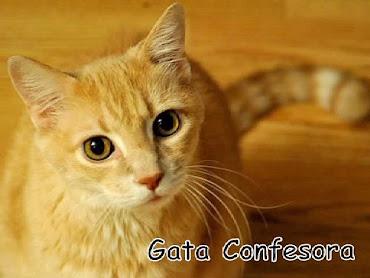 Gata Confesora