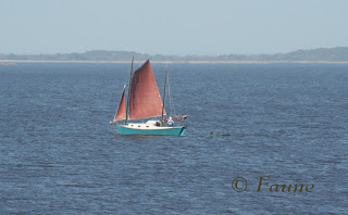 Currituck Sound Sailboat