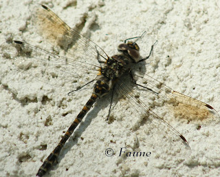 dragonfly on stucco wall