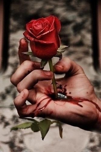 الحياة كالوردة ، جميلة لكن لها أشواك 24119084