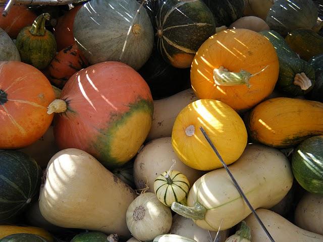 Fall 2009 - Winter Squash Harvest