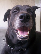 My name is Bogart and I am Sweepy's big balck brother and  I live in Heaven too!