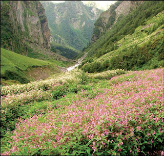 Valley of Flower Uttaranchal