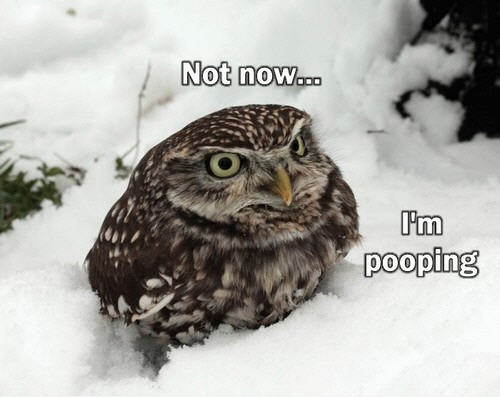 Funny Pics Of Owls. Lenox makes owl figurines?