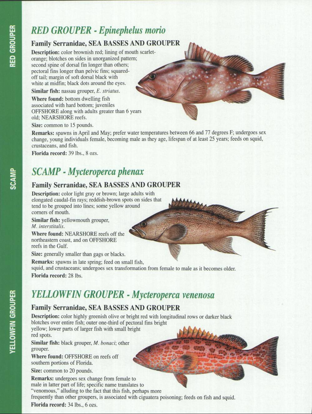 Crystal river fishing report florida gulf fish for Florida saltwater fish species