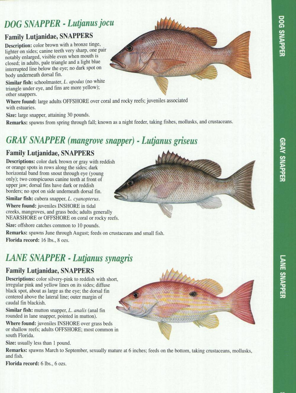 Crystal river fishing report florida gulf fish for Types of fish in the gulf of mexico