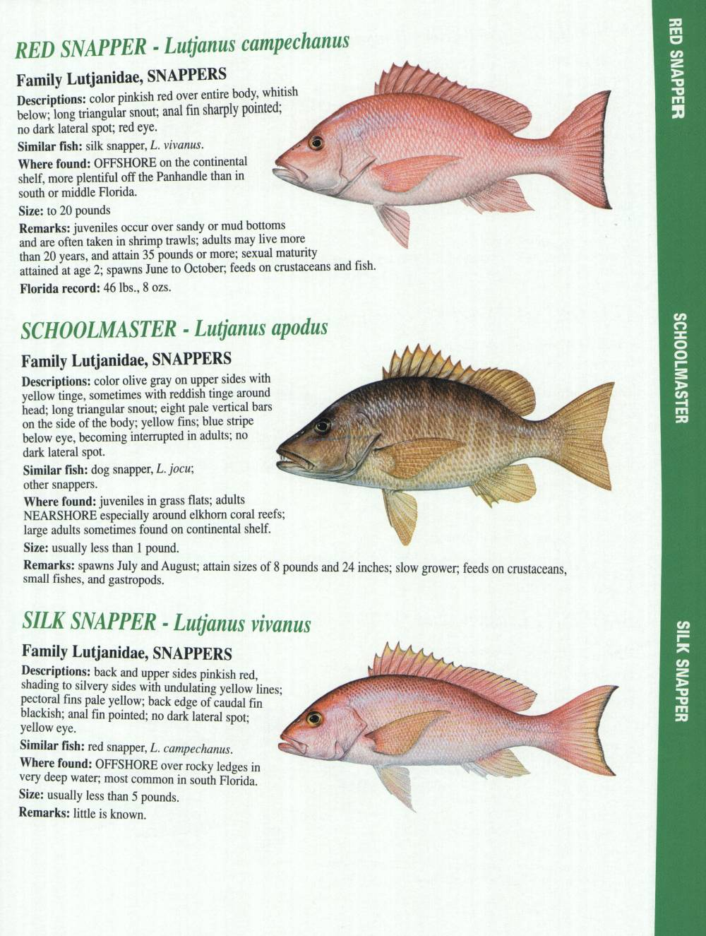 Crystal river fishing report florida gulf fish for Fish of florida