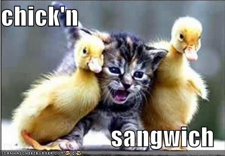 Lolcats Chicken Sandwich, Invisible Corncob, and Mispelling Cat Again.