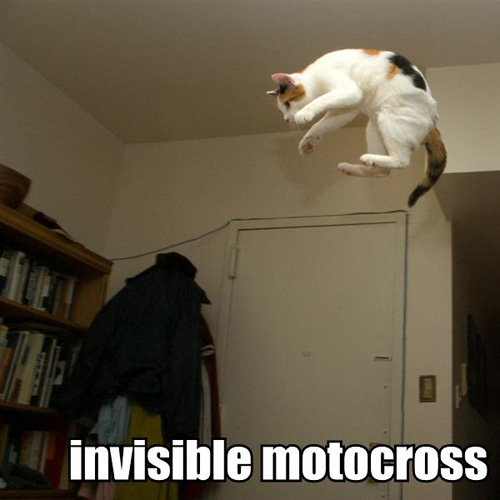 cats Funny Cat Pictures   Funny Dogs & Cats Free Funny Cat
