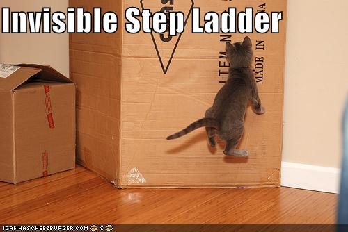 Pictures Cat gallery of funny cat pictures
