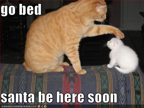 Photobucket funny cat christmas Pictures funny cat christmas