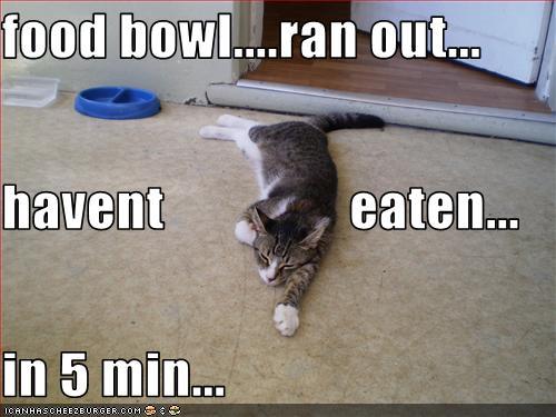lol cat food