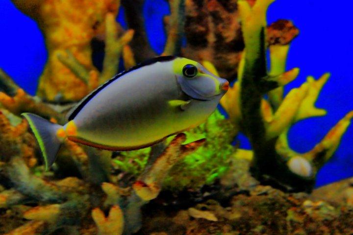 Marine Aquarium 2 Plus Keycode Pour Tranconlo
