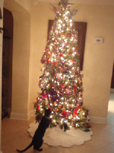 [Christmas+1.jpg]
