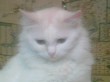my lovely cat banota