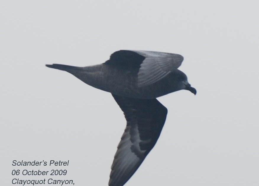 Petrel 2009 Скачать Торрент - фото 10