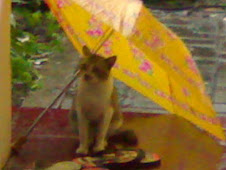 Kucing di bawah payung