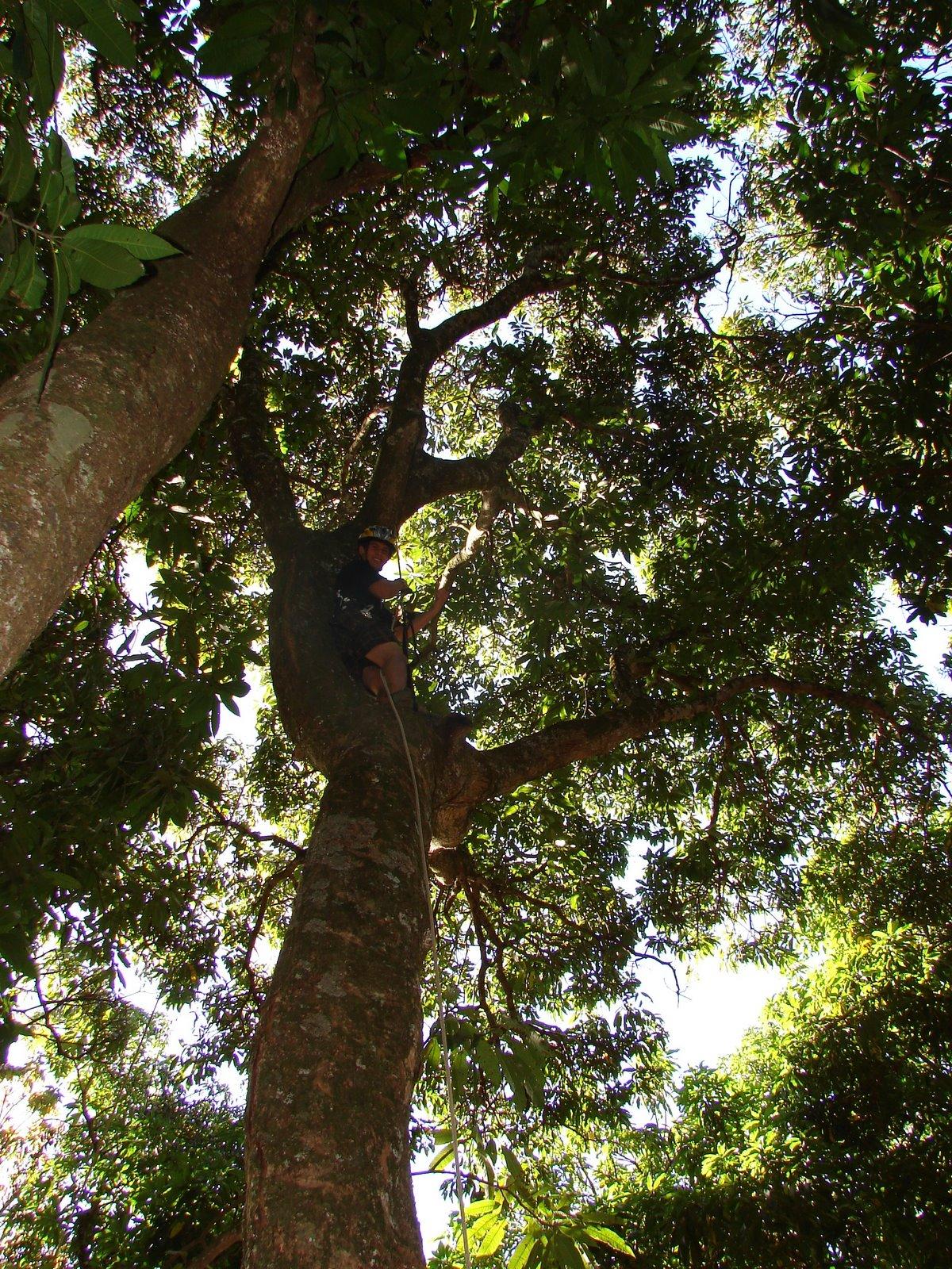 Meu sobrinho Arthur escalando uma mangueira! Mandou bem!!