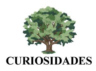 SEÇÃO CURIOSIDADES