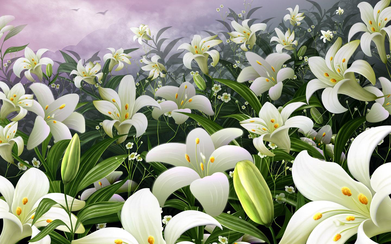 http://2.bp.blogspot.com/_3EQh7n2FUS4/TR1HT3IO0EI/AAAAAAAAHAs/0JxeQ0-6ABc/s1600/1245133653_1440x900_white-lilies-wallpaper.jpg