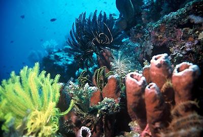 ... di Teluk Manado, yang terletak di utara pulau Sulawesi, Indonesia