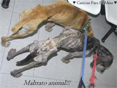 No al maltrato animal!! ponganse en su lugar