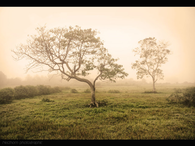 Morning fog at kampung Tualang picture