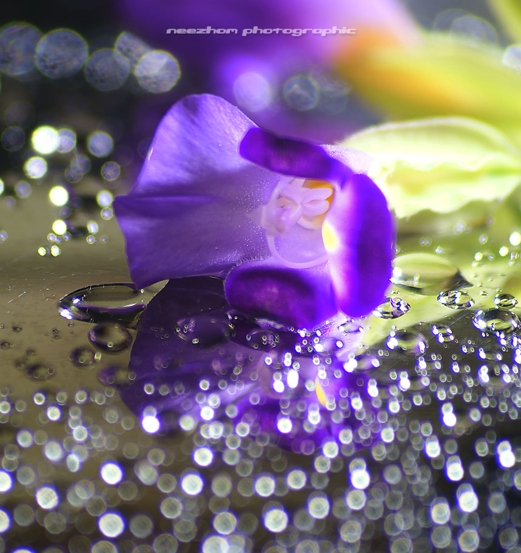 Water drops, bokeh and purple flower