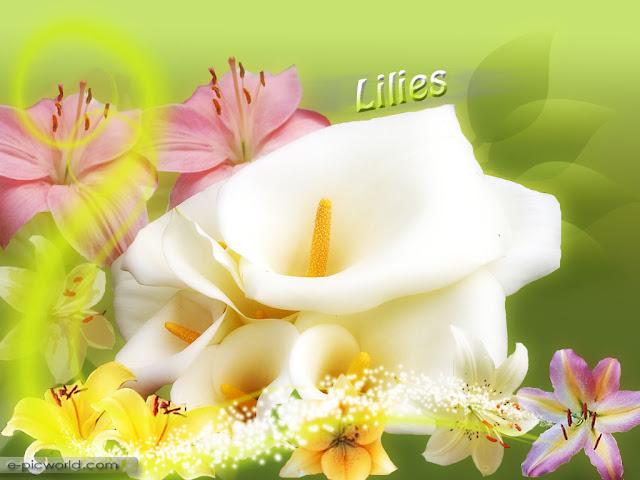 lilies wallpaper 2