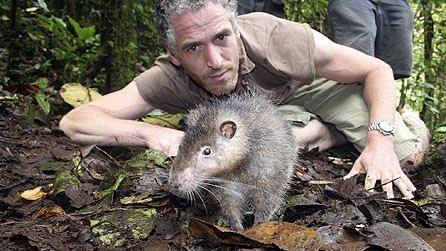 giant rat as bis as cat