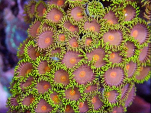 coral picture