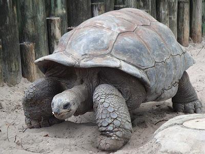 7 Binatang paling lambat di dunia