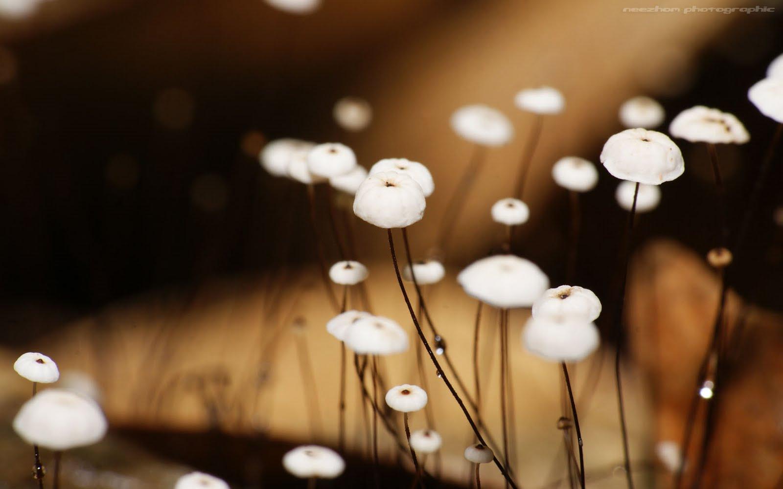 Black stemmed white mushroom