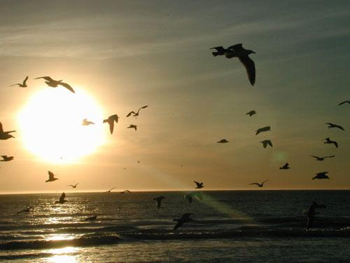 ���� ���� ����� ����� birds.jpg